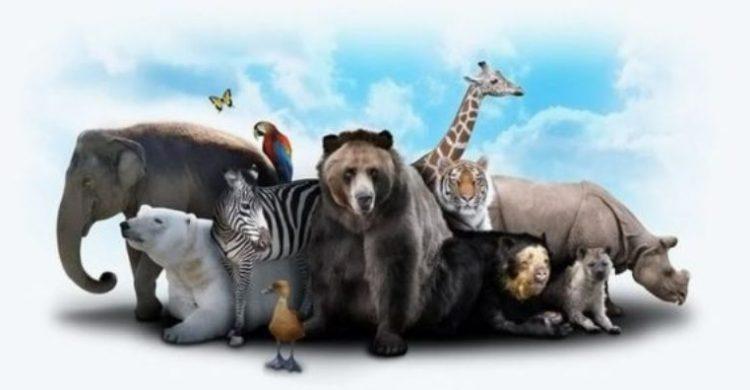প্রাণীজগতের বিচিত্র কিছু তথ্য
