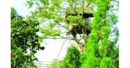 পৃথিবীর পরিছন্ন গ্রামটি ভারতের মেঘালয় রাজ্যের মাওলিননং